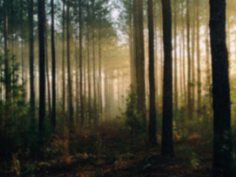 mee het bos in